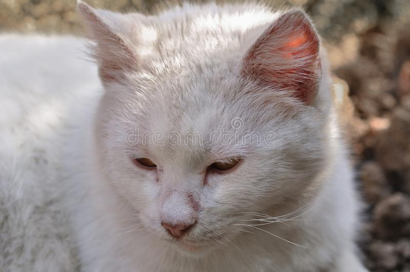 Cute white cat lying in the courtyard on a beautiful sunny day stock photography