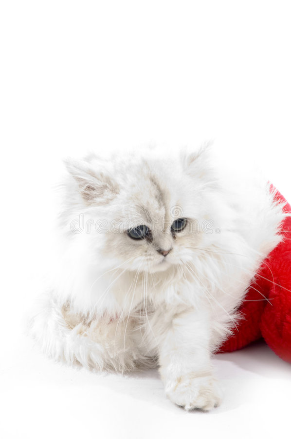 Cute white cat wearing christmas hat royalty free stock image