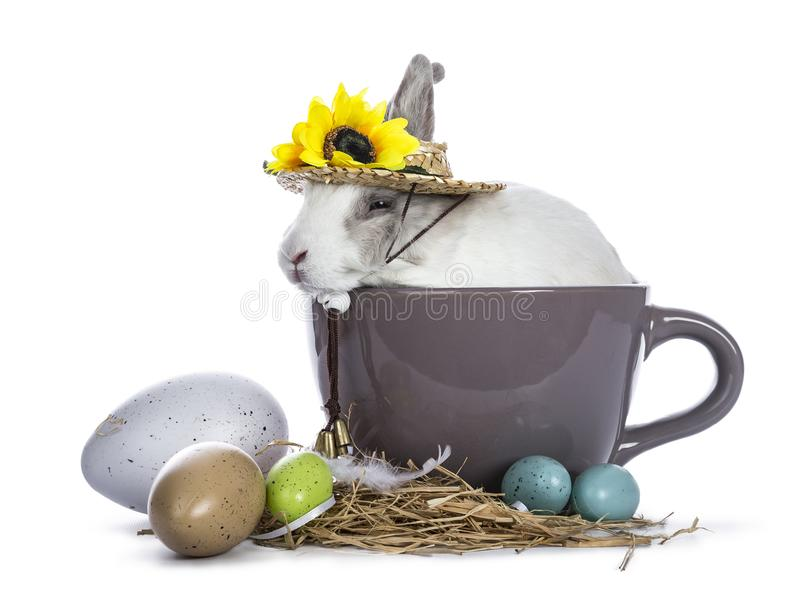 Cute white with grey rabbit. Sitting in ceremic cup with colorful easter eggs and wearing hat with sunflowers isolated on white background stock images