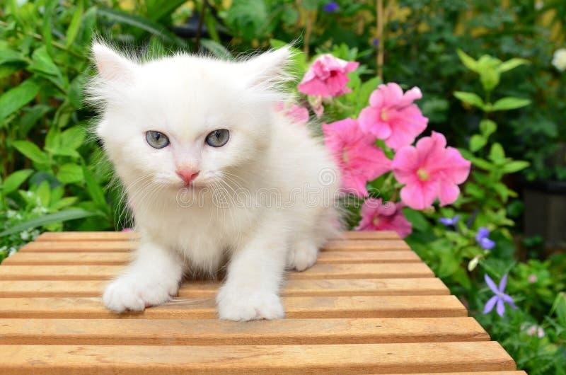 Cute white kitten. In garden stock images