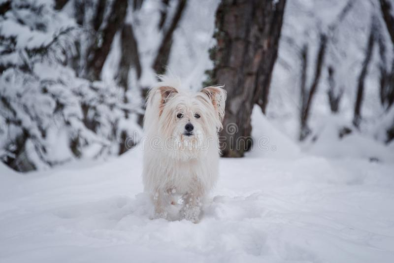A cute white puppy in a forest royalty free stock photo