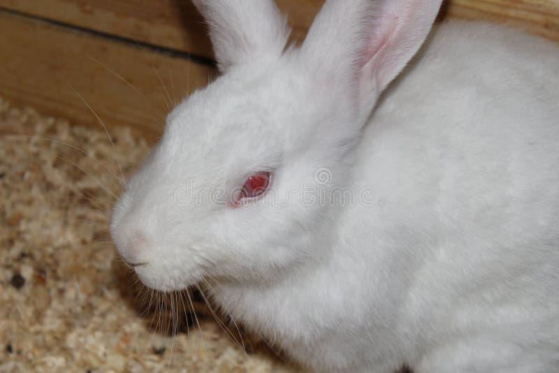 Cute white rabbit stock image