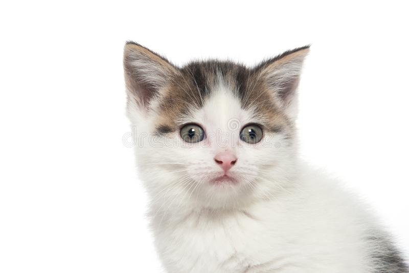 Cute white tabby kitten on white stock photos