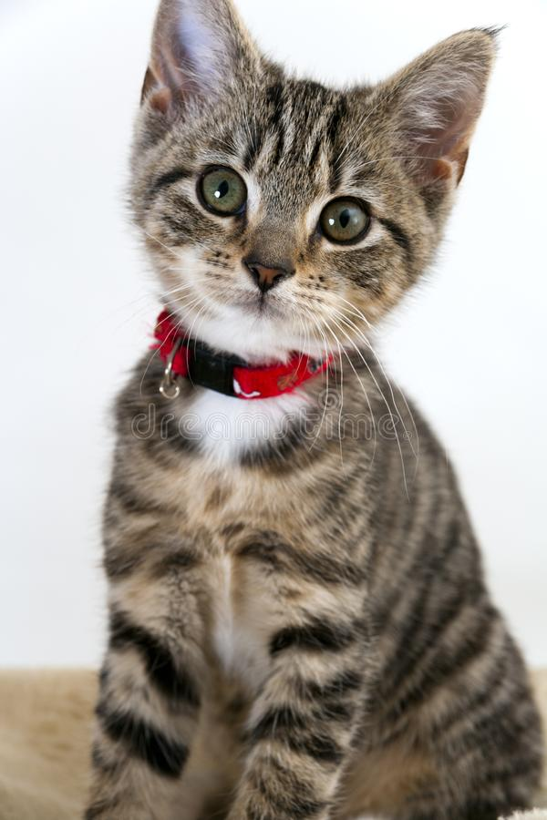 Kitten. Cute wided eyed kitten looking at the camera royalty free stock images