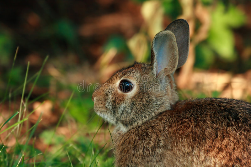 Cute wild rabbit stock photos