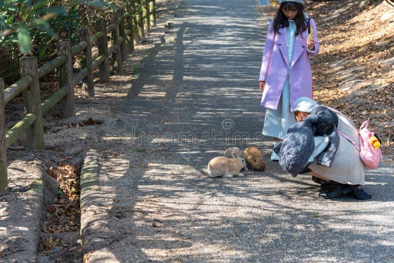 Cute wild rabbits on Okunoshima Island in sunny weaher stock photos