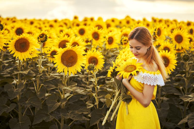Cute woman in a blossoming sunflower field royalty free stock images