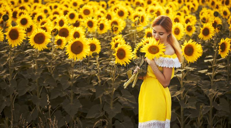 Cute woman in a blossoming sunflower field stock images