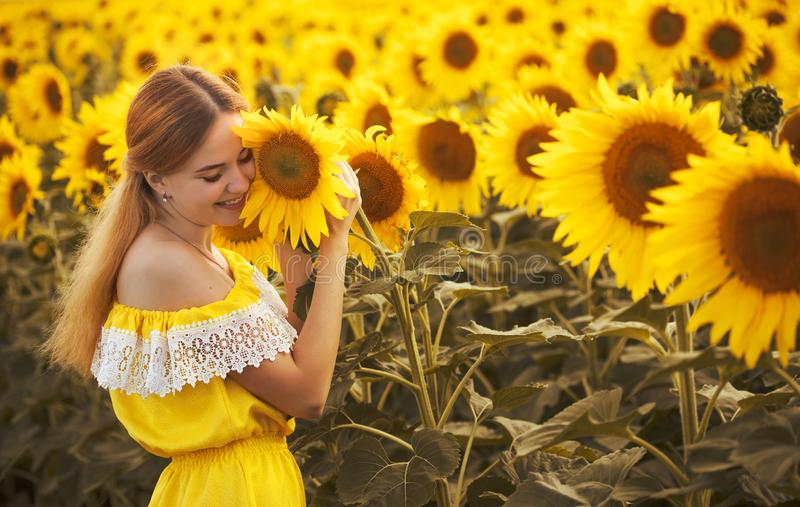 Cute woman in a blossoming sunflower field stock photos