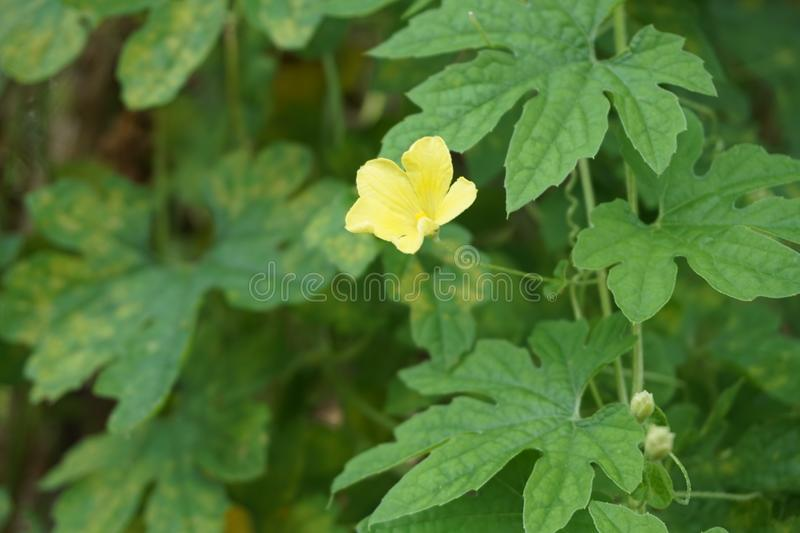 A cute yellow natural flower stock photo