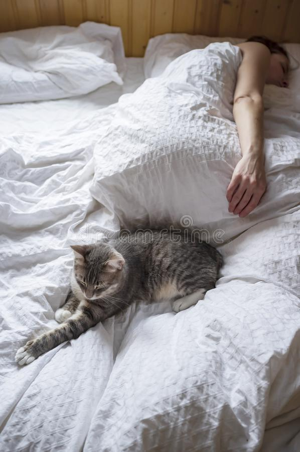 A cute cat sleeps on the bed with its mistress in a wooden country house, in natural light from the window in the early morning stock photo