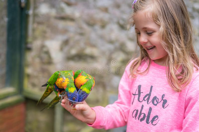 Girl feeding colourful Parrot Rainbow Lorikeets. Cute young Caucasian girl feeding sweet nectar to Colourful parrot Rainbow called Lorikeets stock images