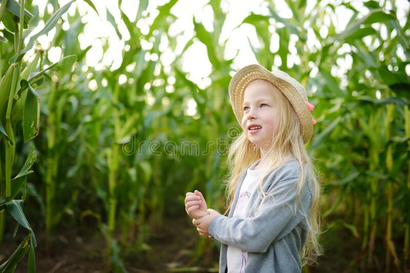 Cute young girl having fun in a corn maze field during autumn season. Games and entertainment during harvest time. Active family leisure with kids royalty free stock photos