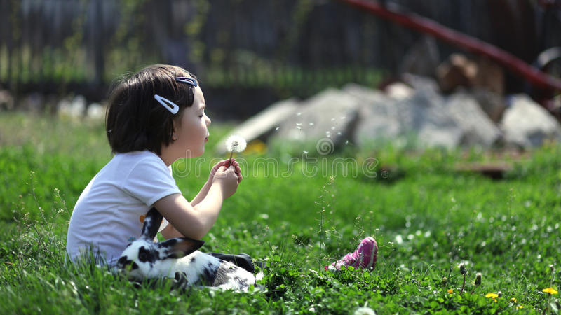 Cute young girl with rabbit blowing a dandelion stock photos