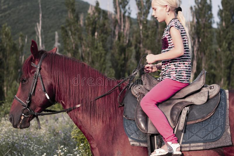 Cute young girl rides in saddle riding a brown horse in forest or Park at sunset. blond child is travelling on a. Beautiful horse. Children`s summer sports camp stock images