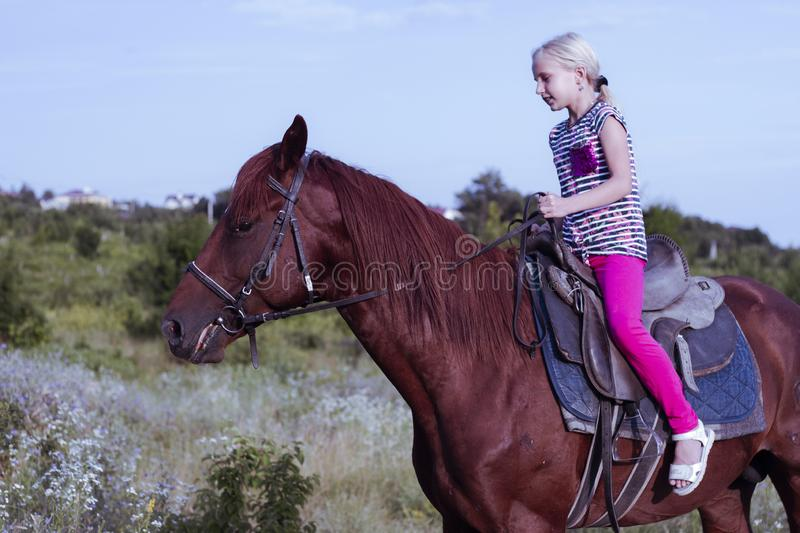 Cute young girl riding a brown horse on a country road at sunset. The child quietly travels on a stallion. The girl royalty free stock photography