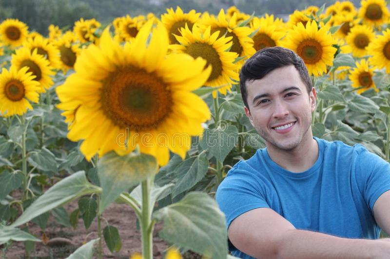 Cute young guy in bright sunflower fields royalty free stock images