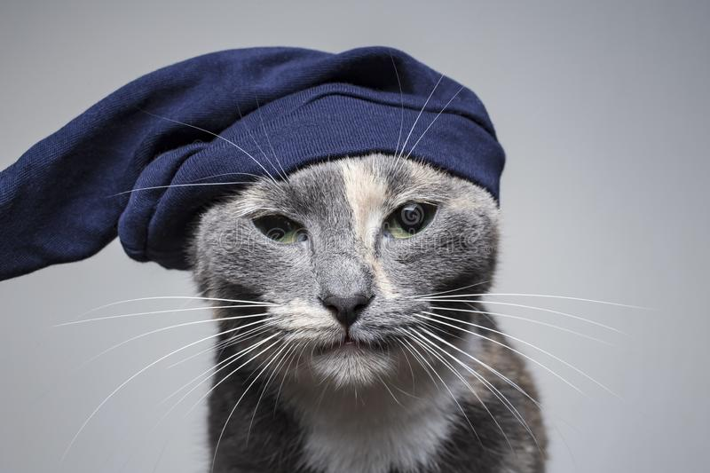 Cute young serious cat in a funny hat stares intently with discontent and claims. Cute young serious cat in a funny hat stares intently with discontent and royalty free stock photography