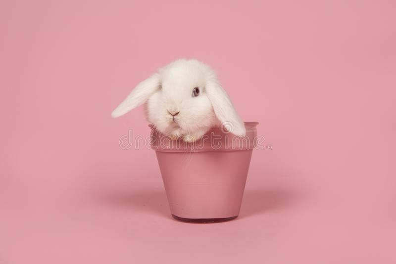 Cute young white rabbit in a pink flowerpot on a pink background stock photo