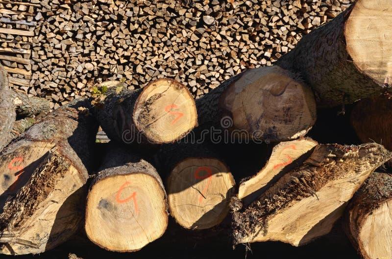 Cuted-Bäume bereit zum Schnitt stockfotos
