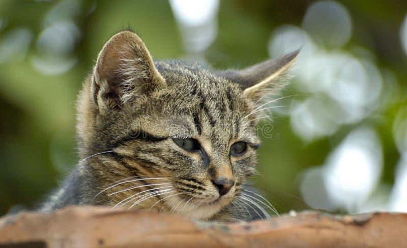 Cuten Kattungen Arkivbild