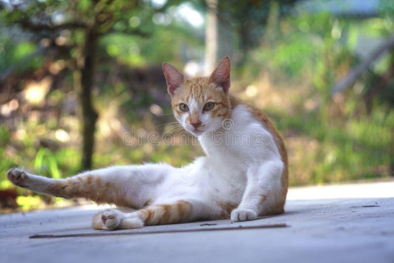 Cuteness av den manliga kattståenden som isoleras med suddig naturbakgrund arkivfoto