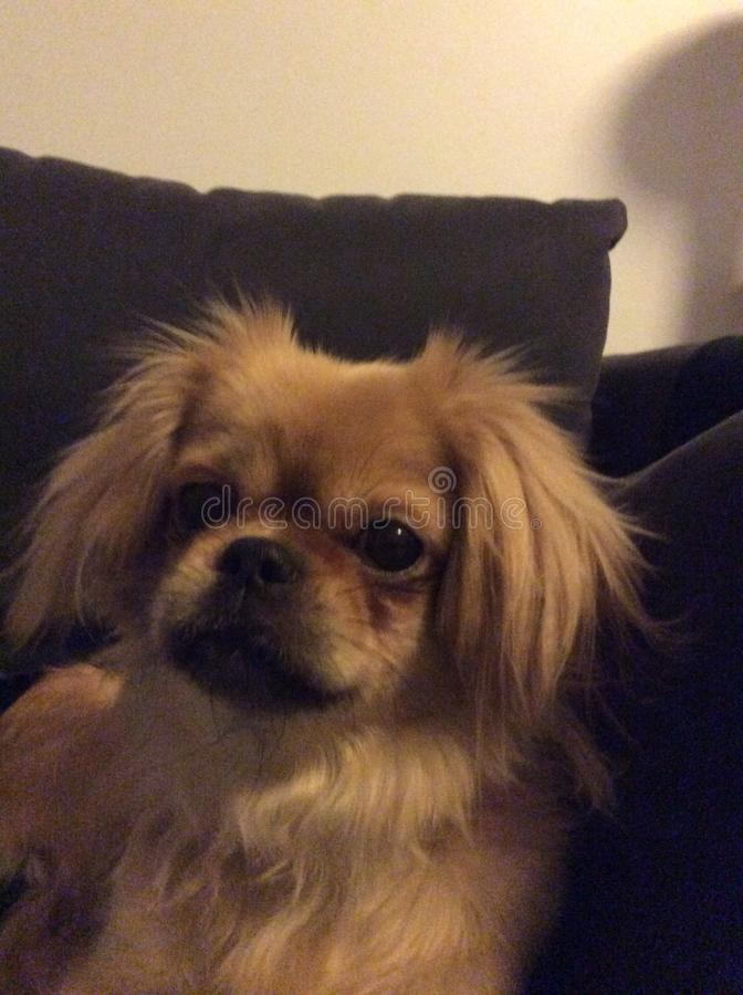 Cutest dog stock photo