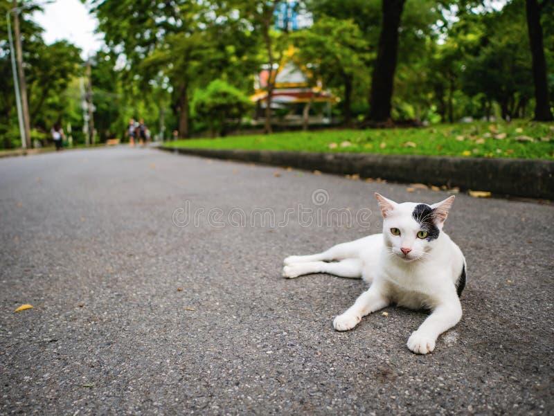 Cutie katt i parkera arkivbilder