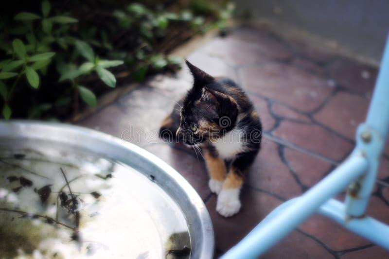 cutie Katze lizenzfreie stockbilder