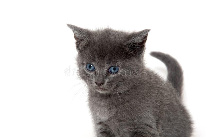 Cuto gatito en blanco fotografía de archivo