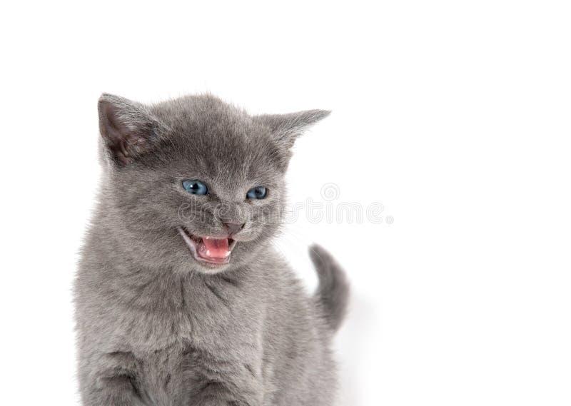 Cuto gatito en blanco imagenes de archivo