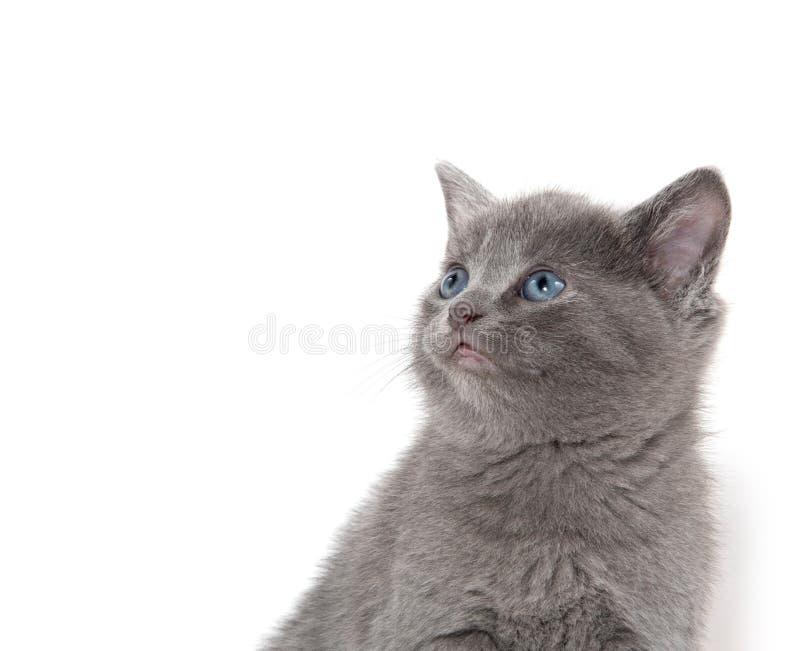 Cuto gatito en blanco imágenes de archivo libres de regalías