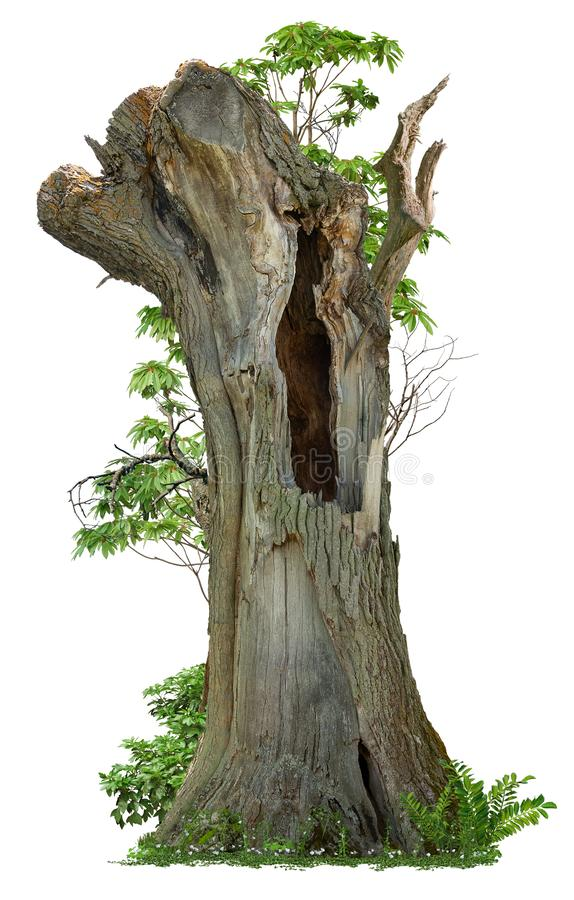 Free Cutout Hollow Tree. Pruned Tree Royalty Free Stock Photography - 160380897