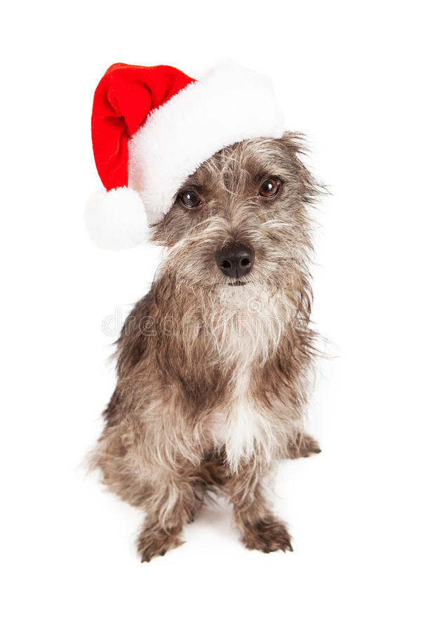 Cutre与圣诞老人帽子的狗狗 库存照片