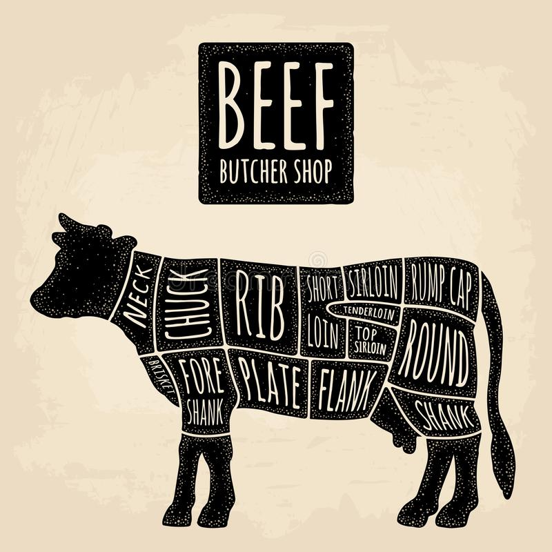 Cuts of cow meat. Beef handwriting lettering. Vintage vector engraving royalty free illustration