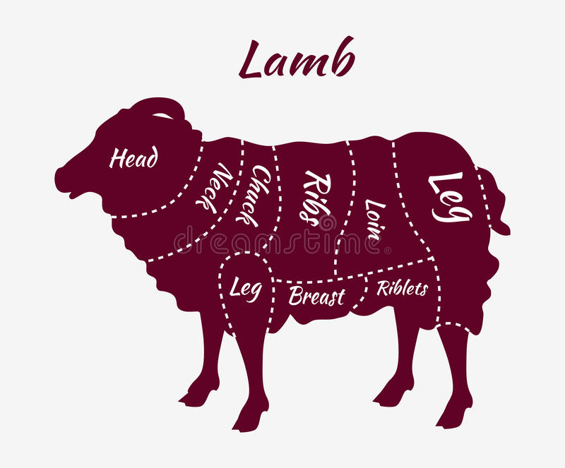 Cuts of Lamb or Mutton Diagram. Cuts of lamb. British cuts of lamb or mutton diagram. Butcher cuts scheme of lamb. Lamb or mutton cuts diagram. Detailed diagram royalty free illustration