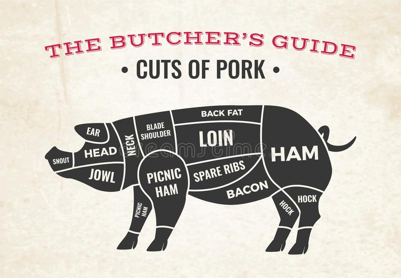 Cuts Of Pork Butchery Diagram. Butchery diagram with silhouette of pig and cuts of pork on background of old paper vector illustration vector illustration