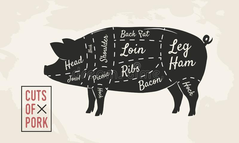 Cuts of Pork. Meat cuts. Butcher diagram. Vintage Poster. Vector illustration stock illustration