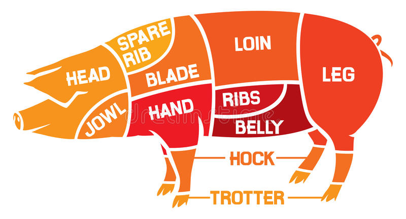 Download Cuts Of Pork - Meat Diagrams Stock Photo - Image of meat, hock: 29084658