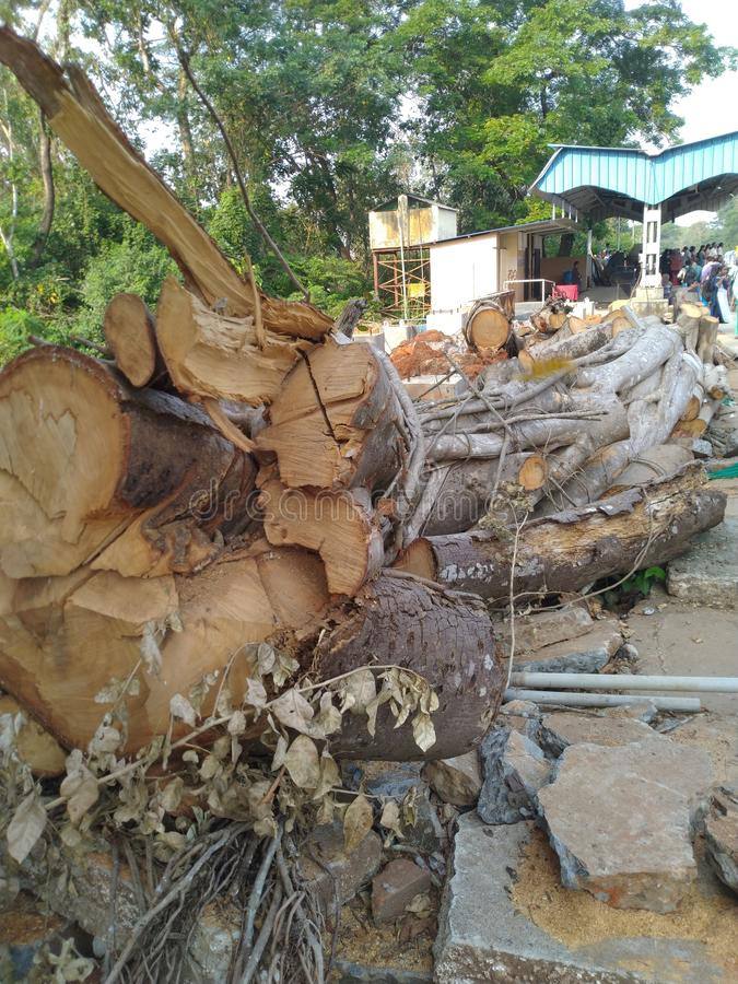 Cutted-Baum stockfotos