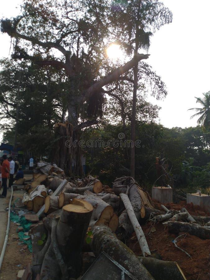 Cutted drzewo zdjęcia stock