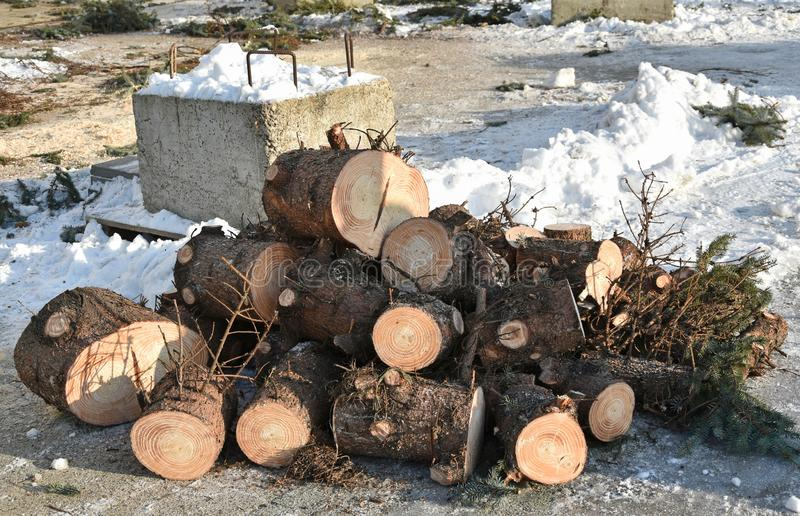 Cutted pine tree trunk in winter stock image