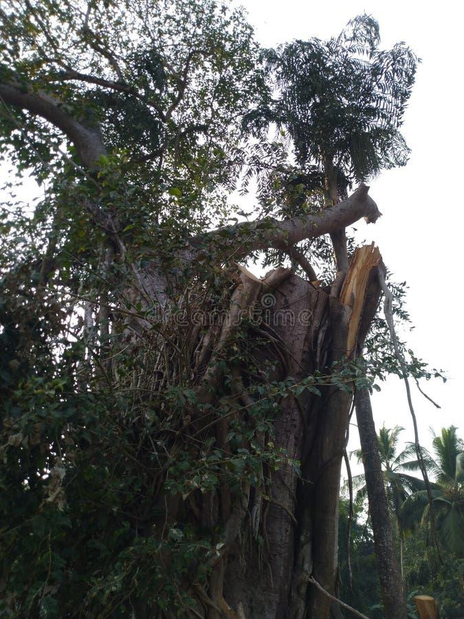 Cutted träd royaltyfri bild