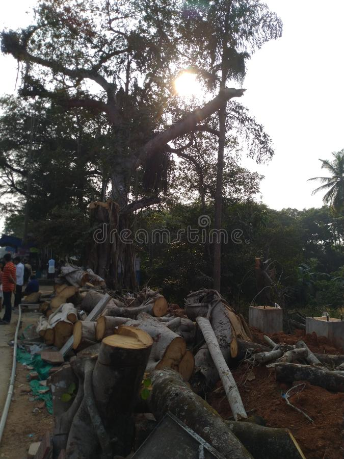 Cutted tree. In Malappuram Kerala India stock photos