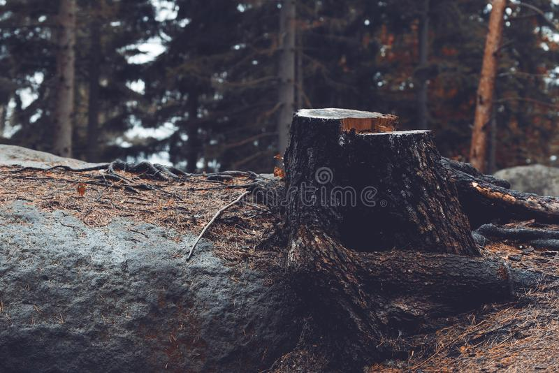 Cutted tree royalty free stock photos