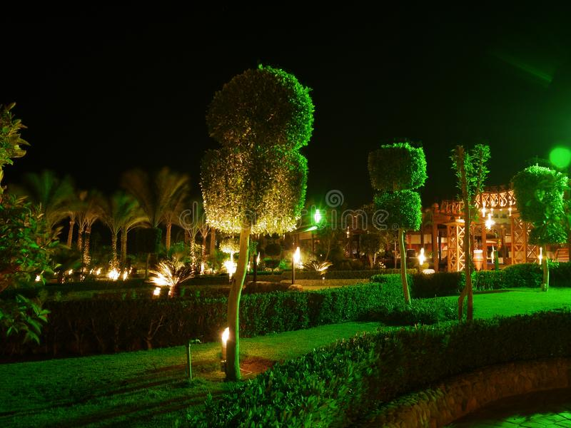 Egypt Tropical Green Garden. Cutted trees near Egyptian hotel. Much green and lights, night skies stock photos