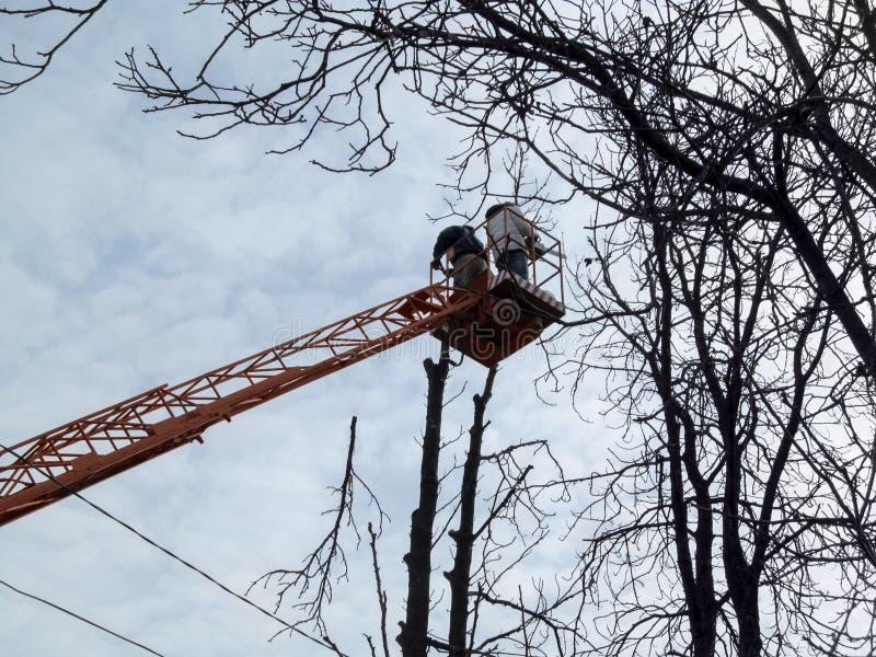 Cutted van tak vliegt neer, en luchtplatform met arbeiders op achtergrond van elektrodraden De lente-herfst-winter achtergrond stock afbeeldingen