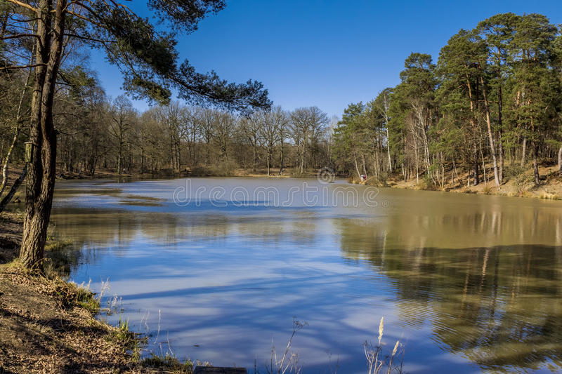 Cutthroat pond Rambouillet Forest France royalty free stock photos