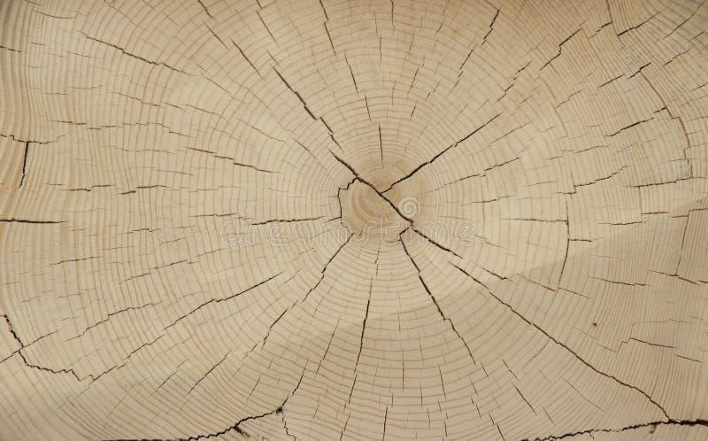Cutting of ancient wood stock photos