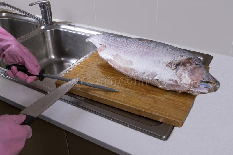 Cutting and cleaning big fish stock photography